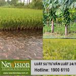 Điều kiện chuyển đổi đất trồng lúa sang trồng cây hàng năm hoặc kết hợp nuôi trồng thủy sản