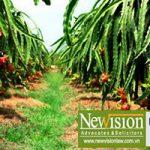 Bồi thường thiệt hại đối với cây trồng, vật nuôi khi thu hồi đất