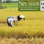 Hạn mức giao đất nông nghiệp