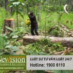 Xử phạt hành vi vi phạm bảo vệ rừng