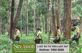 Xử phạt hành vi vi phạm về bảo vệ rừng